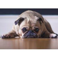 Überwachung von Haustieren