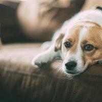 Haustiere alleine zuhause