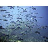 Unterwasserkameras