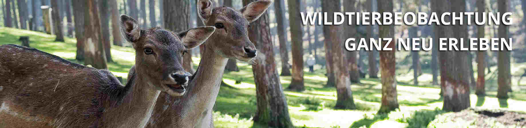 Wildtierbeobachtung ganz neu erleben